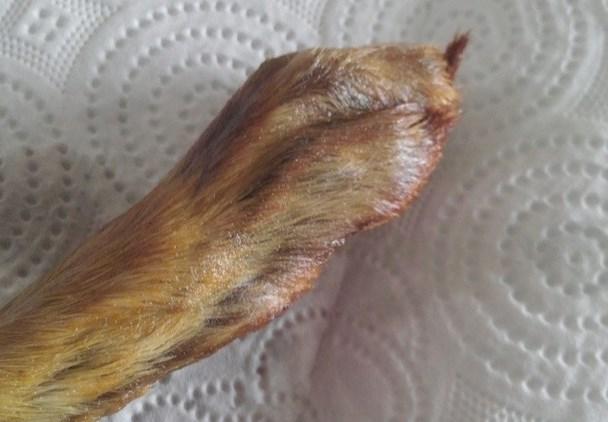 tavşan ayağı