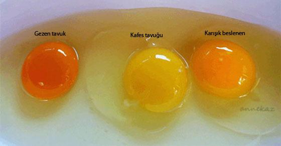 yumurta-sarısı