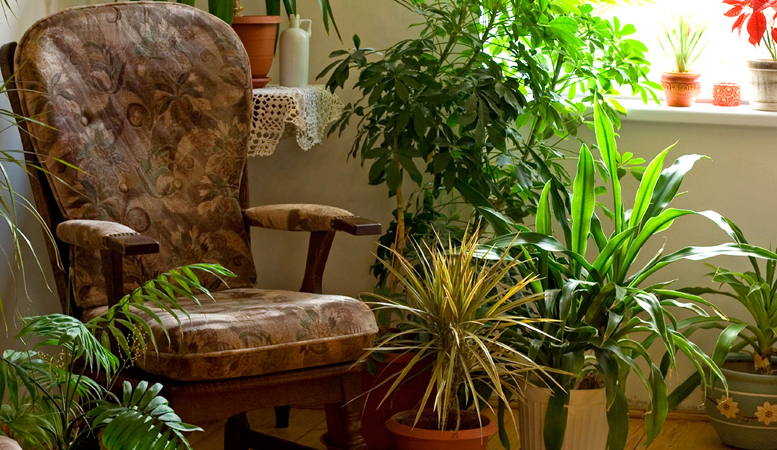 ev-bitkileri