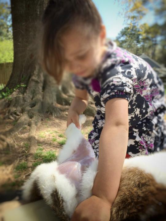 kızına-tavsan-kesmeyi-öğreten-baba