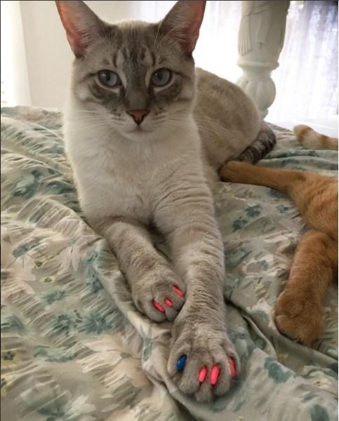 kedi takma tirnak 2