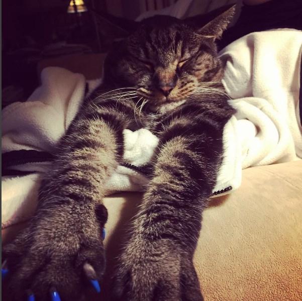 kedi takma tirnak 6