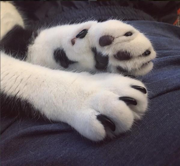 kedi takma tirnak 7