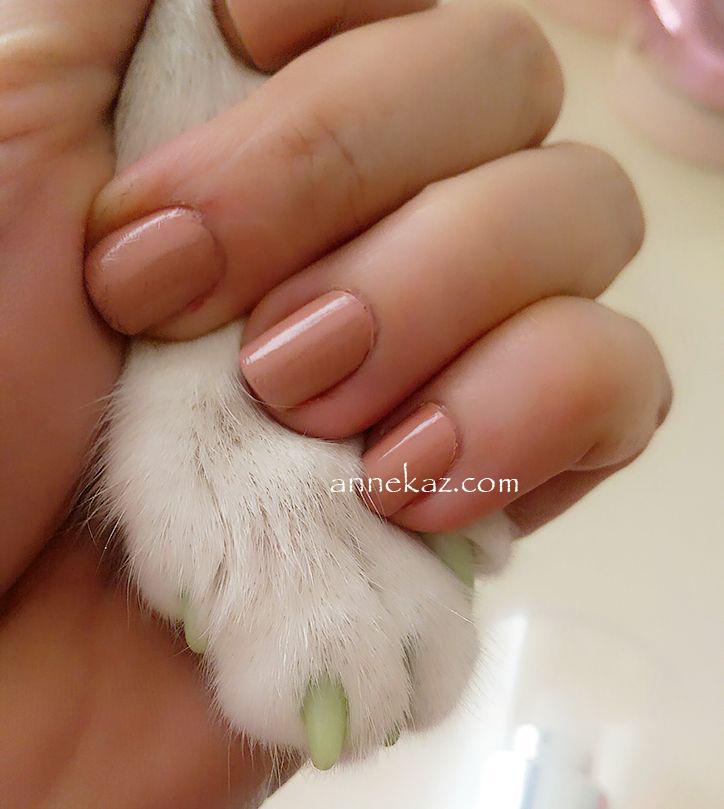 kedi tirnak 1