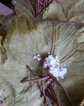 yaprak salamura klasik 2