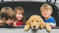 Three children in the back of vehicle with new puppy